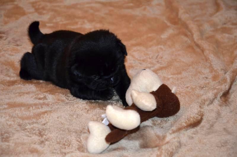 Calypso drei Wochen alt