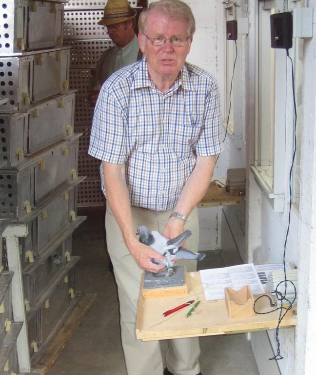 Heinz Brinkmann zeigt, wie die Taube beim Einsetzten richtig erfasst wird