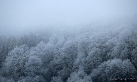 Jour de brouillard un jour de décembre (2018). Le froid a transformé le paysage en un lieu féerique. (Janvier 2019