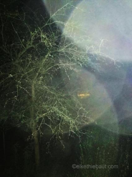 «Nightshot», photo prise sans flash à partir d'une des fenêtres qui donnent sur mon jardin. Une photo presque abstraite. 2019