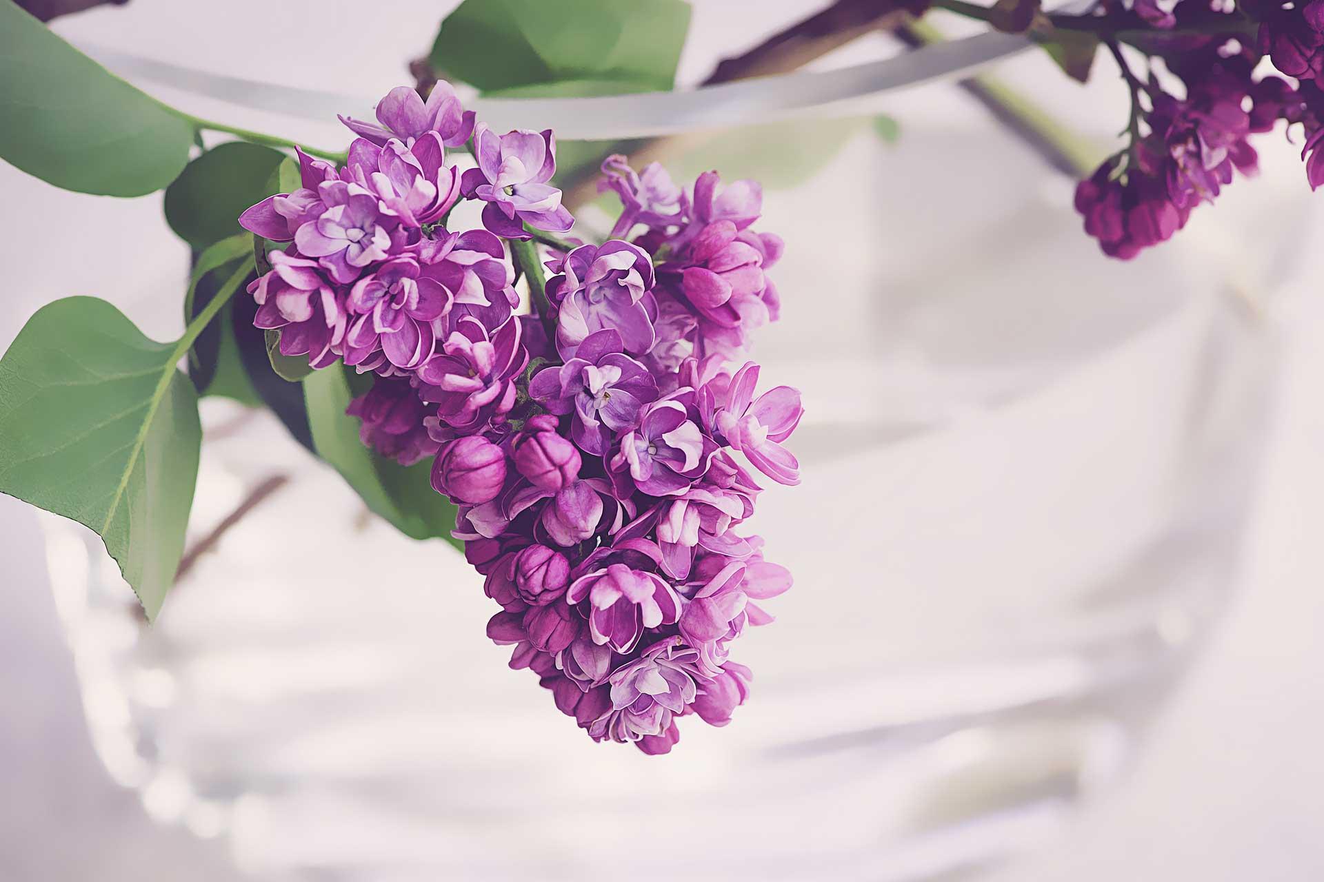 farbe violett wirkung und bedeutung der farbe violett lichtkreis. Black Bedroom Furniture Sets. Home Design Ideas