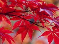 Die Farbe Rot