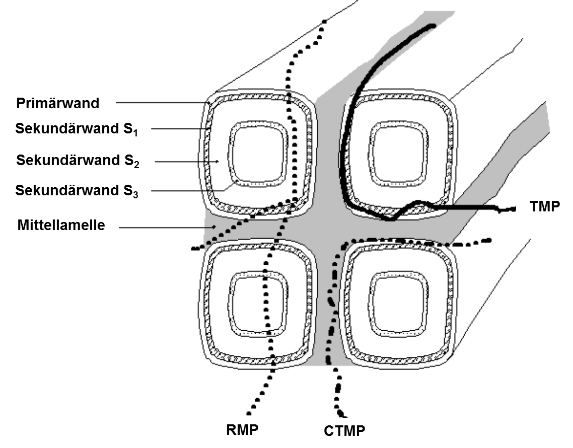 Modellvorstellung über das Herauslösen der Faser