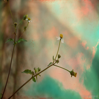 """Simple Flowers"" hand painted photograph"