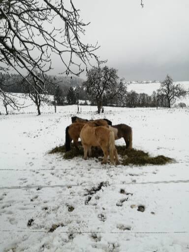 Koppel im Schnee