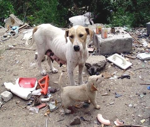 Straßenhunde in Rumänien