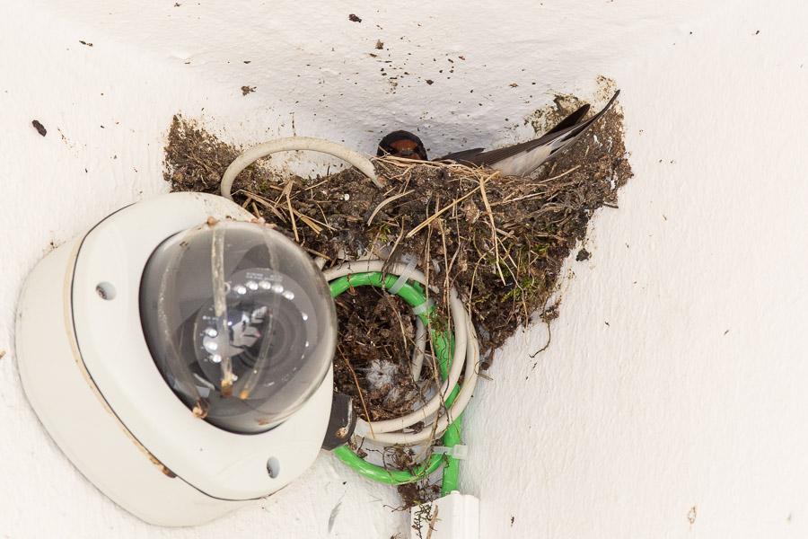 Neues Nest beim Flötzinger (Foto: Juretzky)
