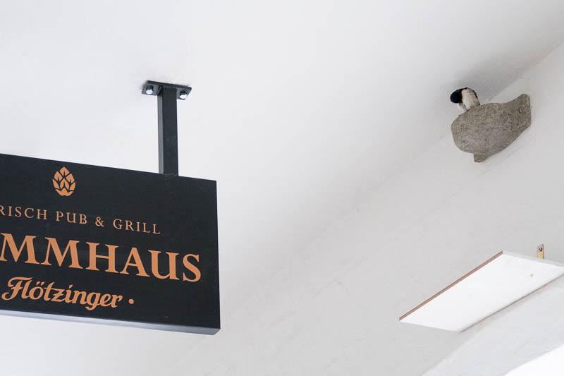 Besetztes  Nest am Flötzinger Stammhaus (Foto: Juretzky)