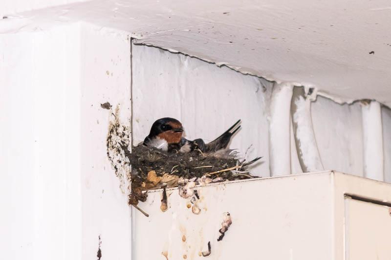 Neues Nest in der Nikolaistraße (Foto: Juretzky)