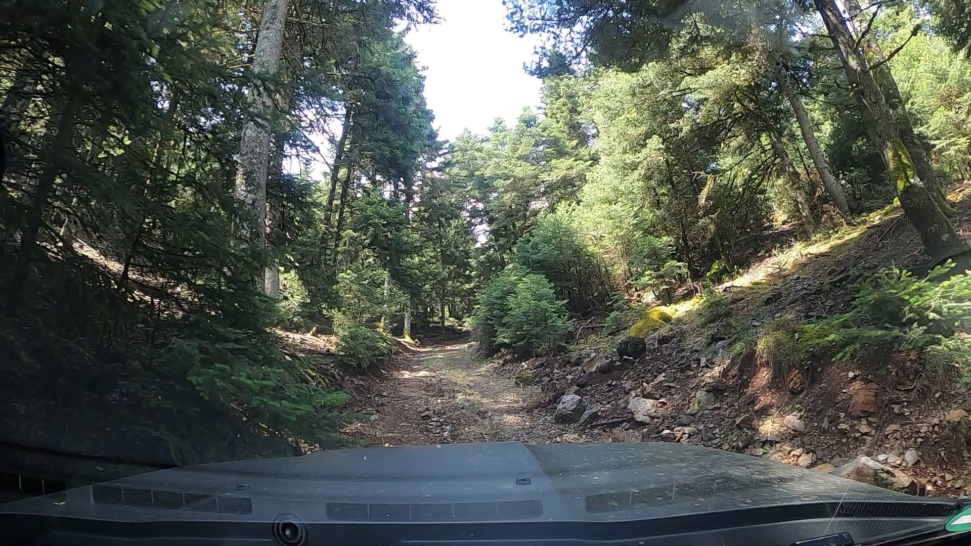 Peloponnes Tour - Durch die Wälder