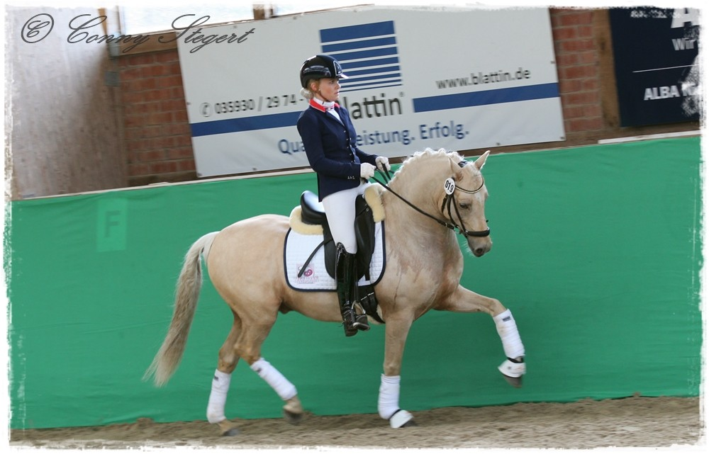 Tackmann´s Giotto- Dt. Reitpony (Station Tackmann, Boodstedt)