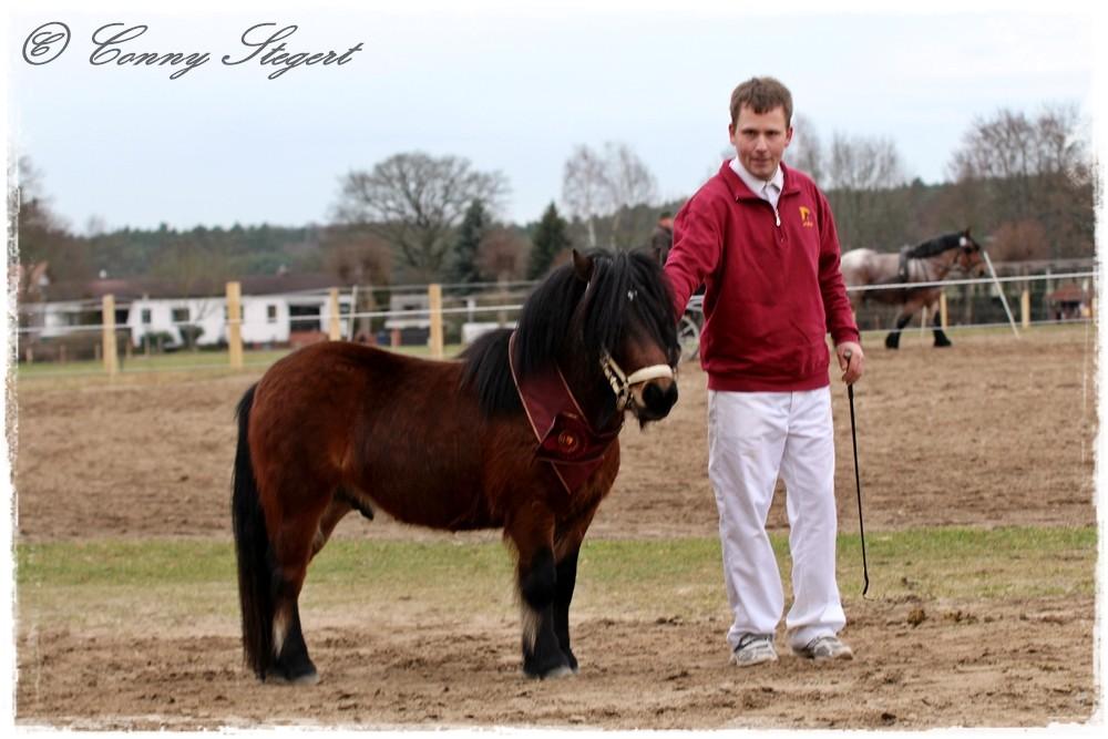 Ingo - Shetland Pony (Marcus Weingart, Faulenhorst)