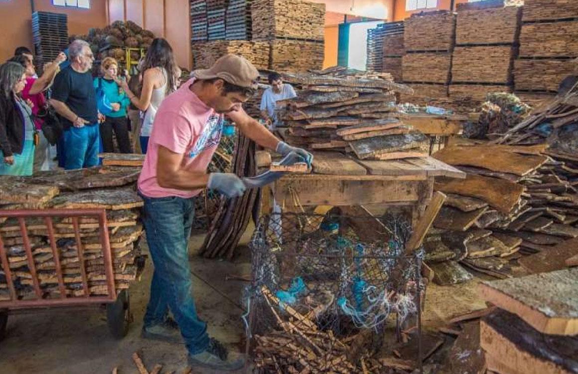 cork-factory-visit-algarve-portugal