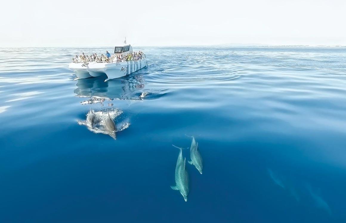 observation-dauphins-algarve