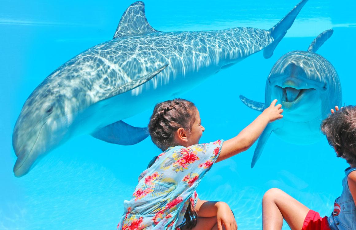 zoo-marine-algarve-dophins