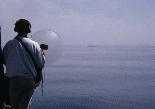 Au loin un souffle de vie, une baleine