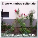 Muba-Mai-Suchbild