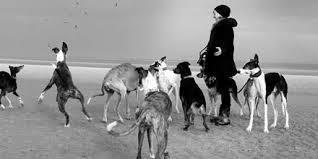 Monika Mosch mit Windhunden Windhundtraining