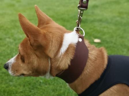 Startleine Leder Windhund Bolleband