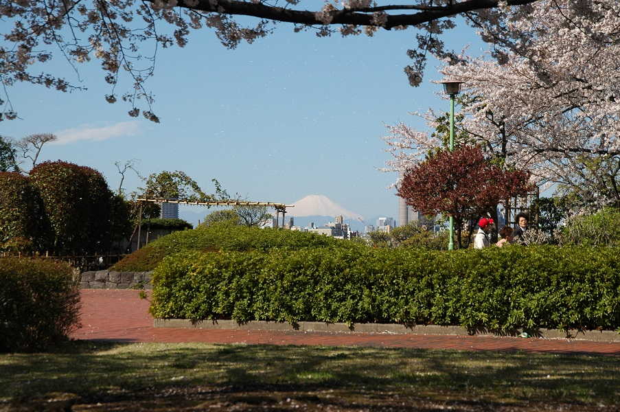 葛飾区小菅西公園 現在は北千住に大なビルが建ちここからは見えません。