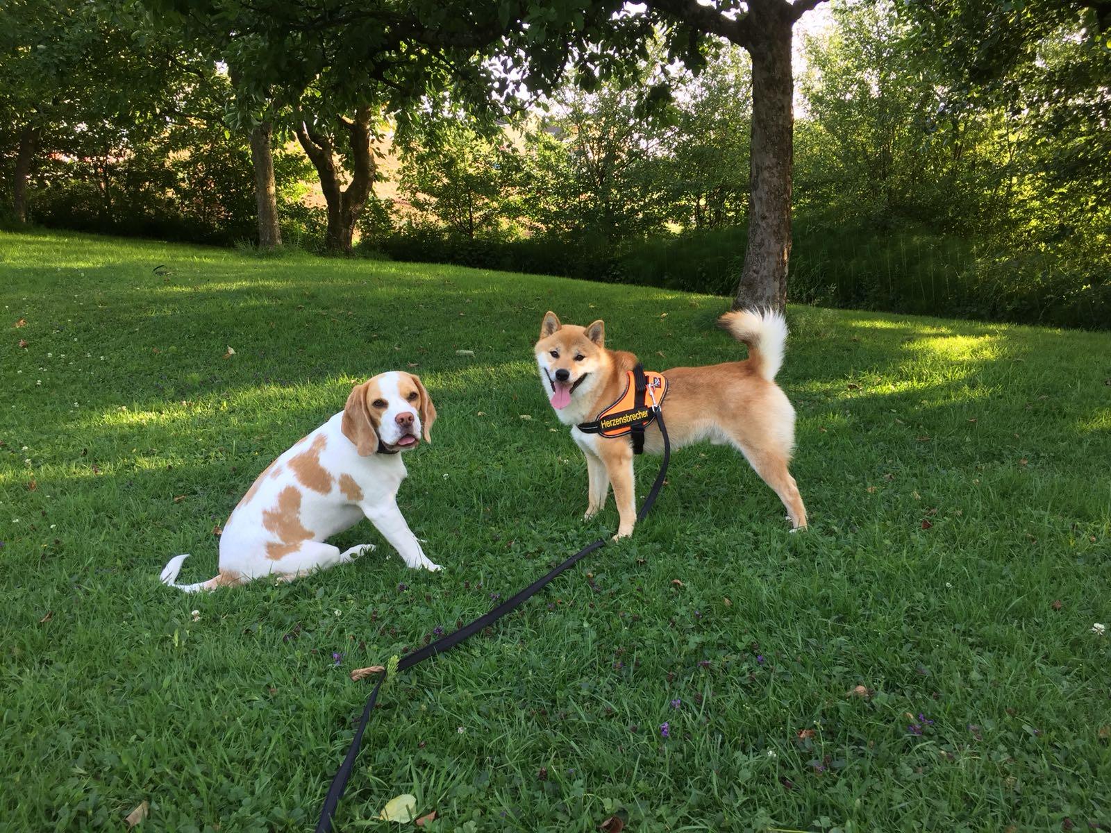 Laika und ihr Freund
