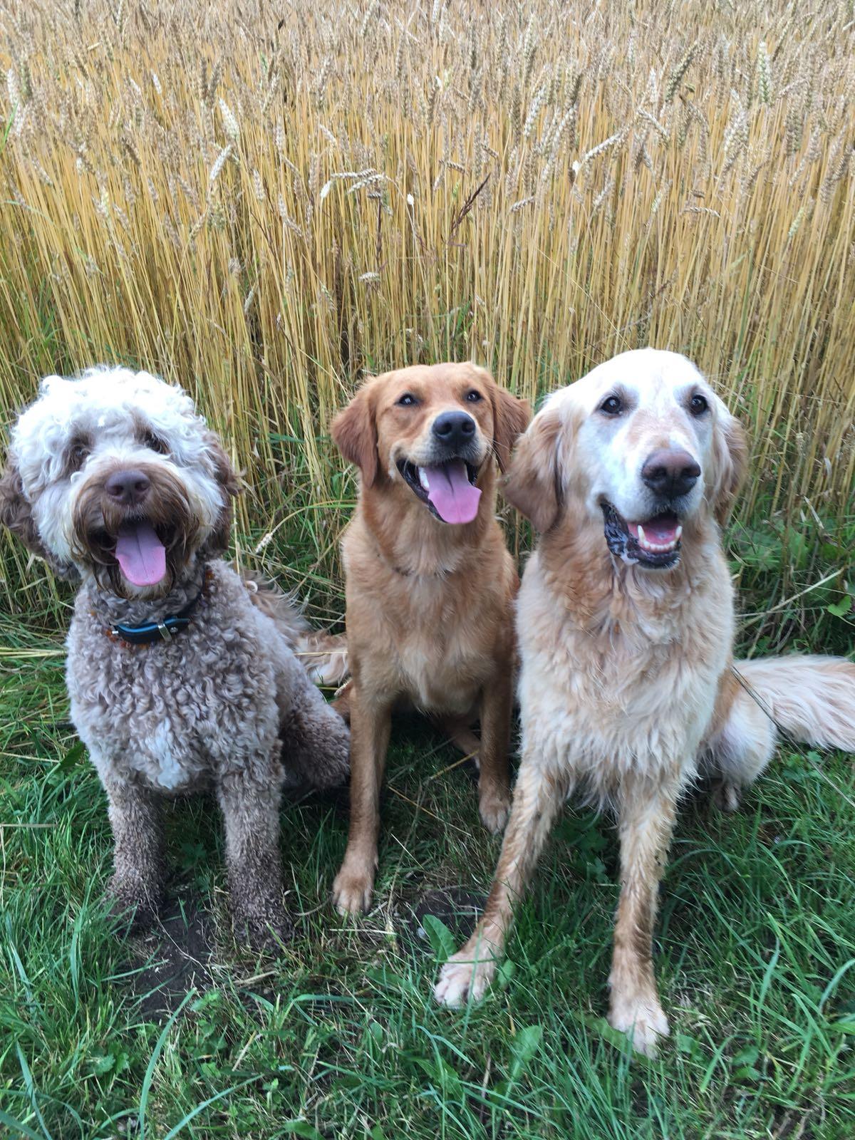 Mambo, Lynn und Sunny
