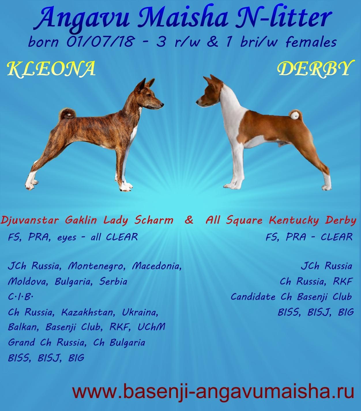 Amedelyofpotpourri: Basenji Puppies Kentucky