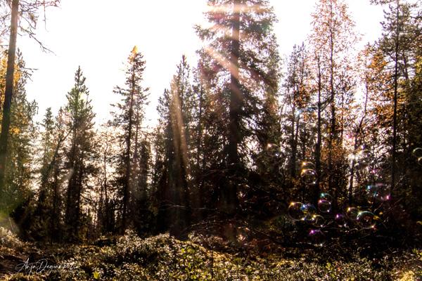 Seifenblasen im Wald