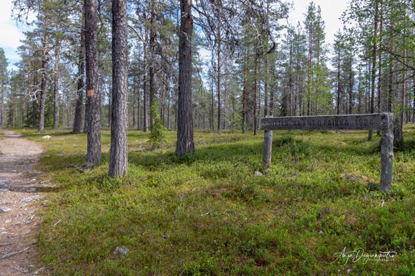 unterwegs im wunderschönen alten Wald