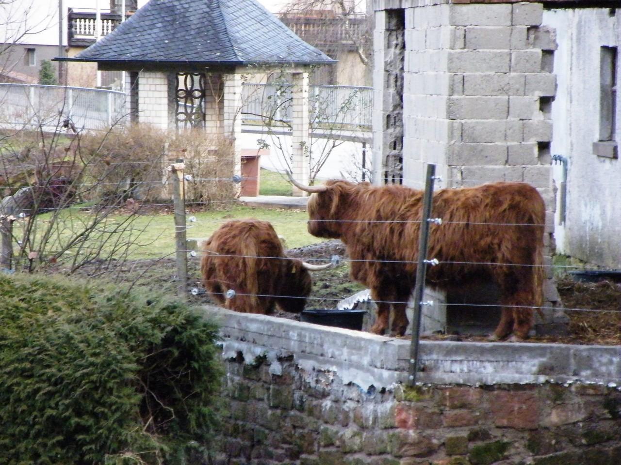 meine neuen pelzigen Nachbarn, einfach schöne Tiere.