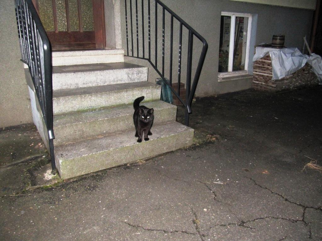 Dorfkatze die überall Zuhause ist