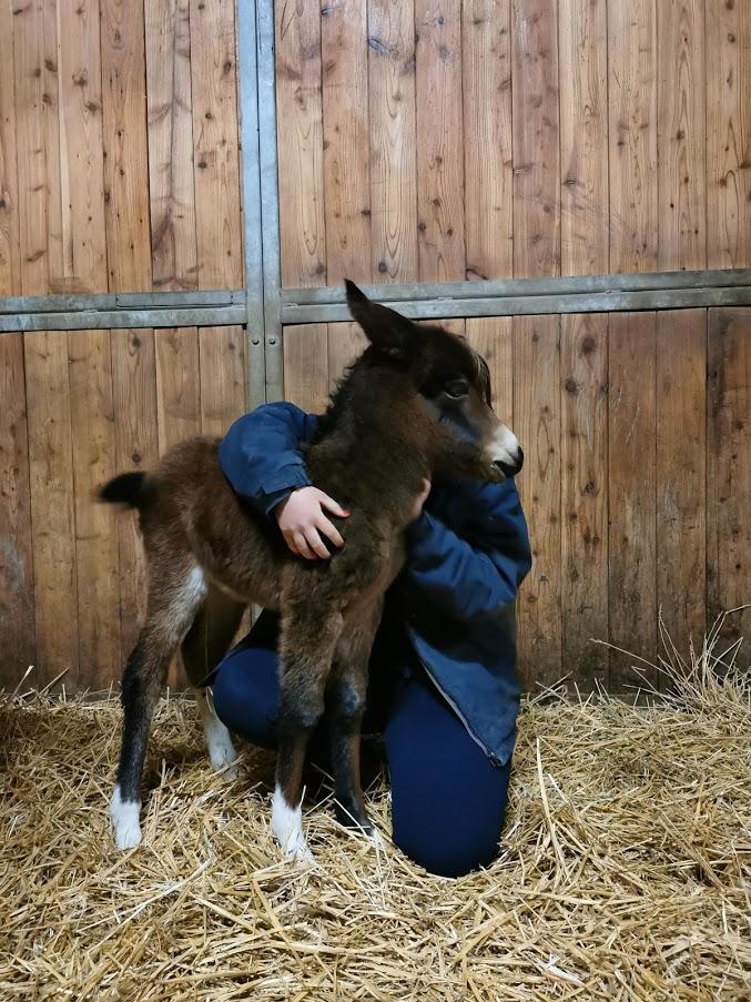 Ponsel Sandy wurde am 24. April 2021 auf dem Ponyclub Horsbüll geboren.