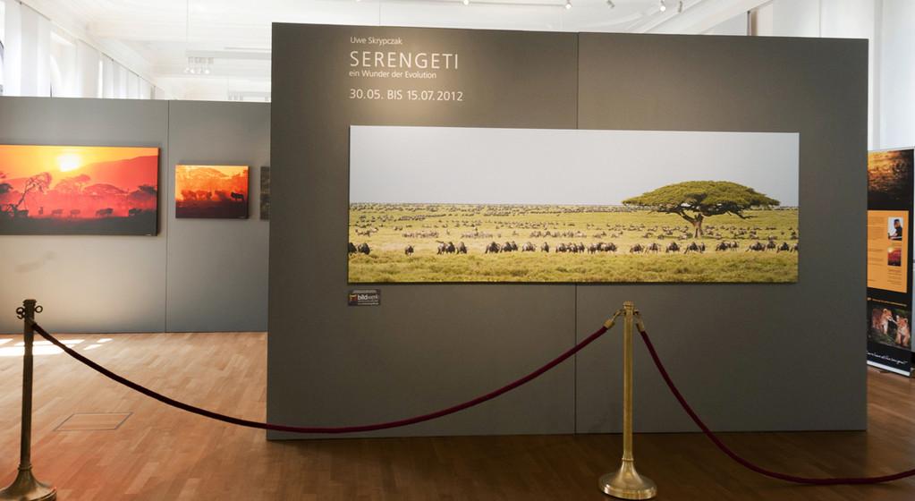 Serengeti, Ausstellung, Bonn, Wildlife Fotografie, Afrika, Naturschutz
