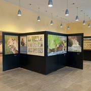 Serengeti Ausstellung im BMZ