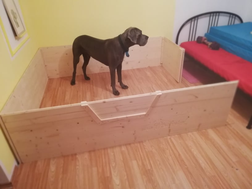 Das Aufstellen der Wurfbox weckt selbst bei unserem Vito Interesse