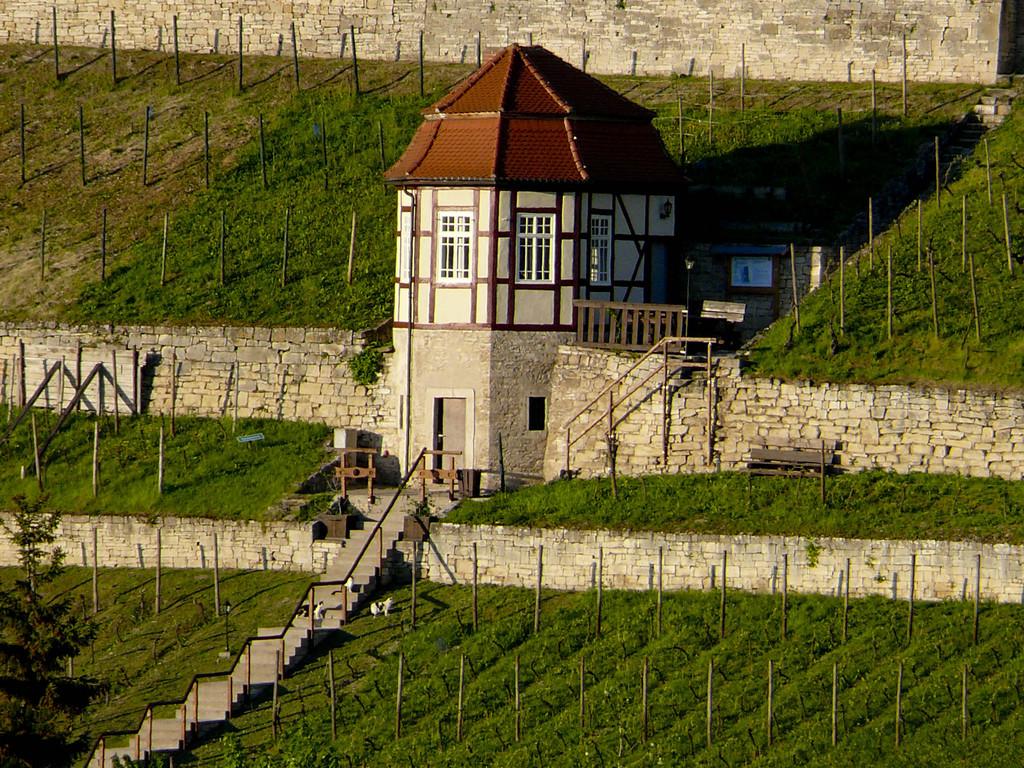 Umgebung - Weinanbaugebiet Freyburg