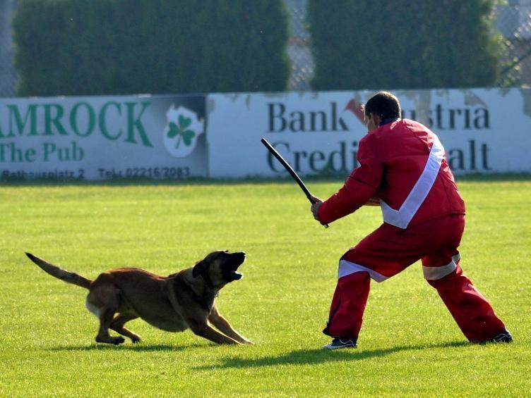 1.FCI-Qualifikation für 2011 in Untersiebenbrunn, Fotos: Manuela Gruber