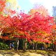 万博記念公園紅葉まつり