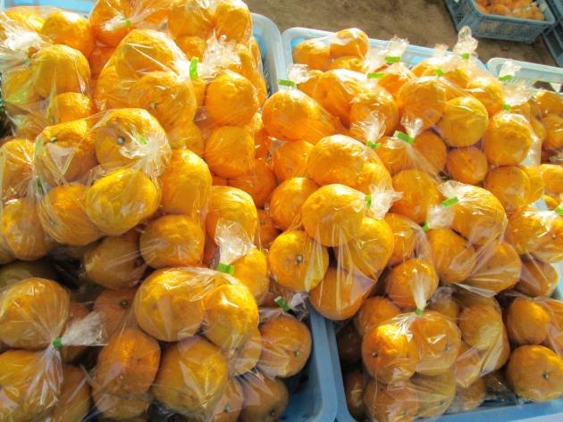 箕面名産の柚子がこんなに!