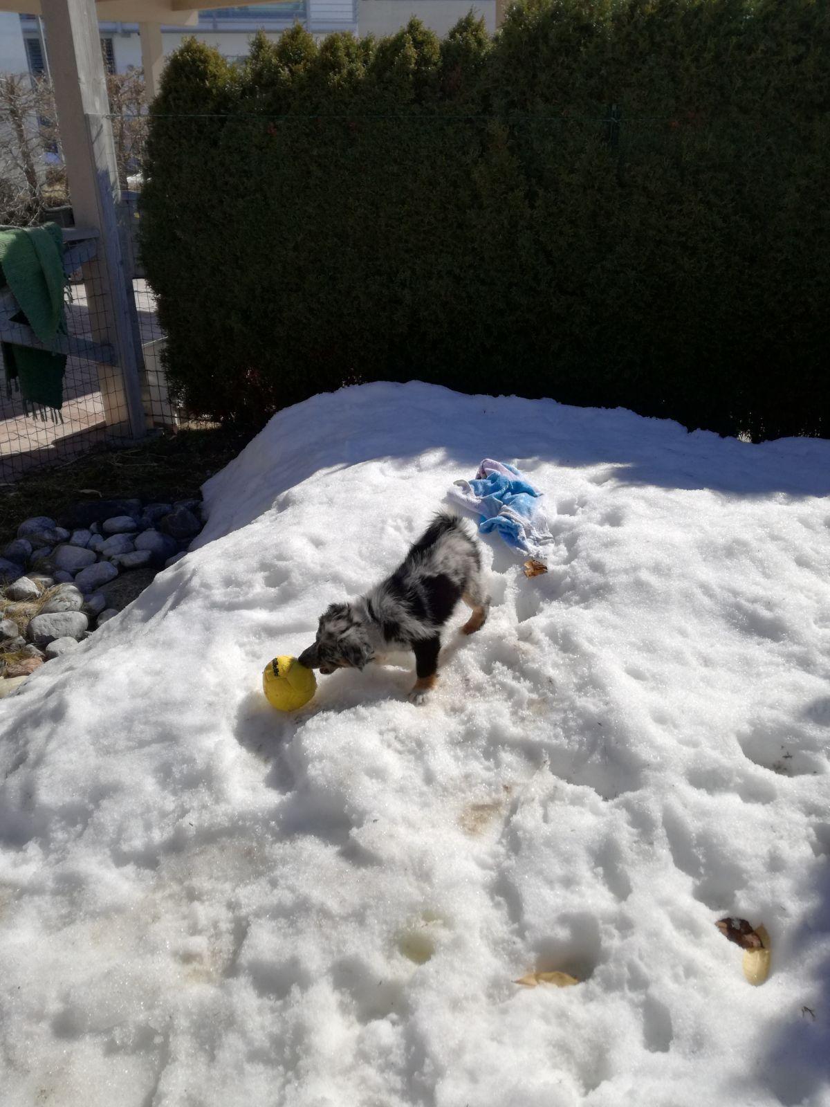 Cara im Schneeglück - den hat sie heuer bei uns ja noch nicht kennen gelernt - macht sichtlich Spaß!