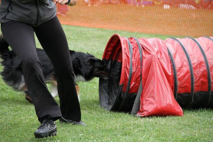 Der Hund absolviert ein Hindernis - der Hundeführer läuft schon weiter.