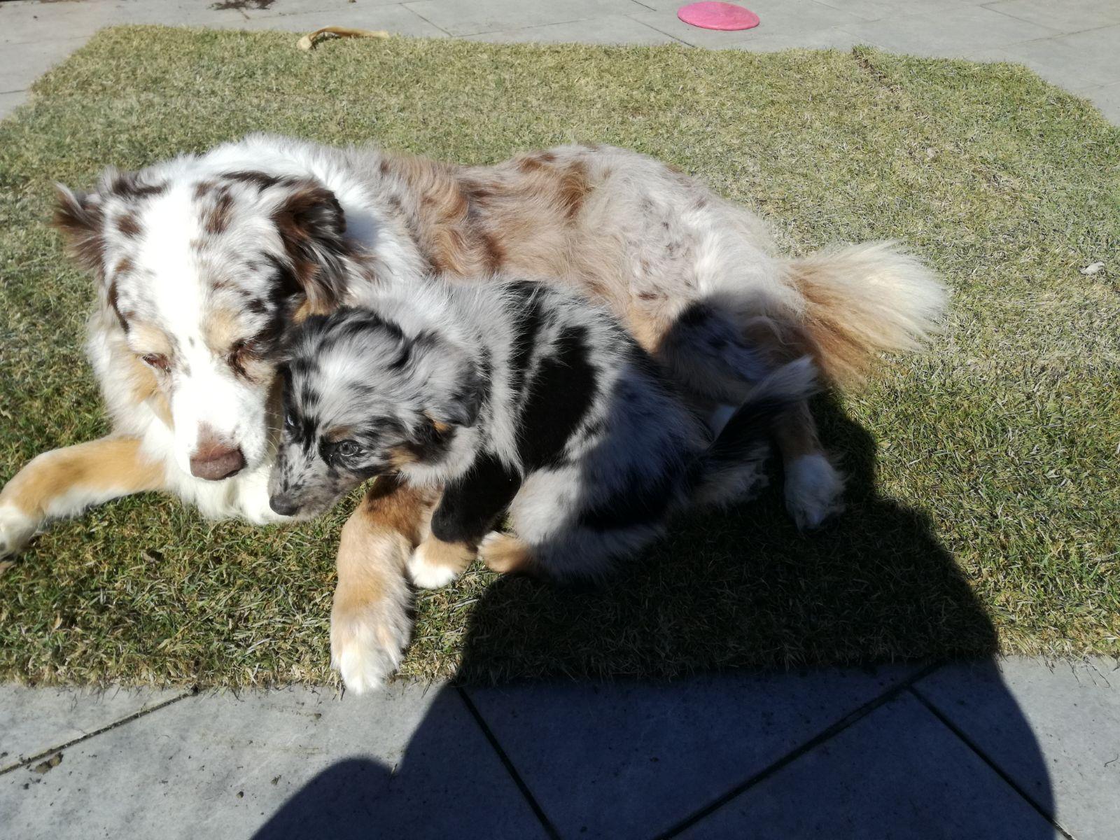 Cara mit ihrer neuen Freundin und Mitbewohnerin Fairy beim Kuscheln :-)
