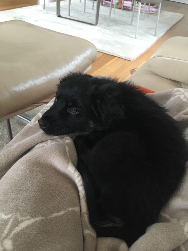Ciak beim gemeinsamen Couchkuscheln