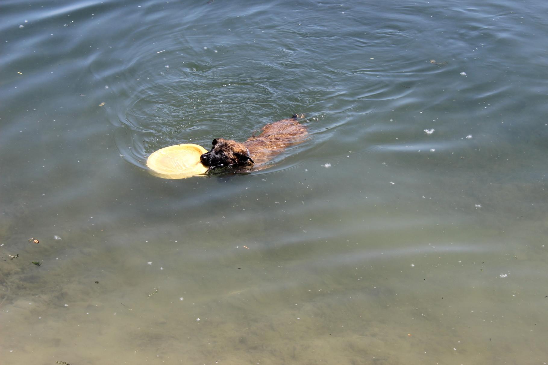 schwimmen, hach, das kann ja jeder