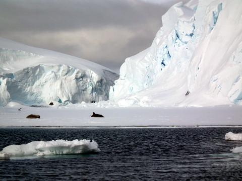 zum Bremenkanal, der um diese Jahreszeit noch mit Fast-Ice bedeckt ist, auf dem sich Krabbenfresser Robben sonnen