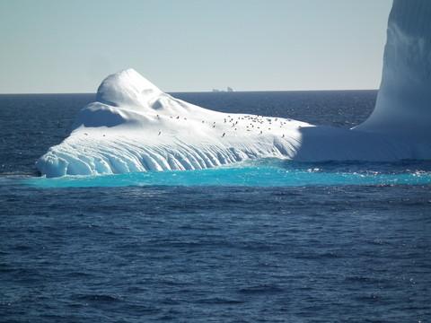 Adelie Pinguine auf Eisschollen