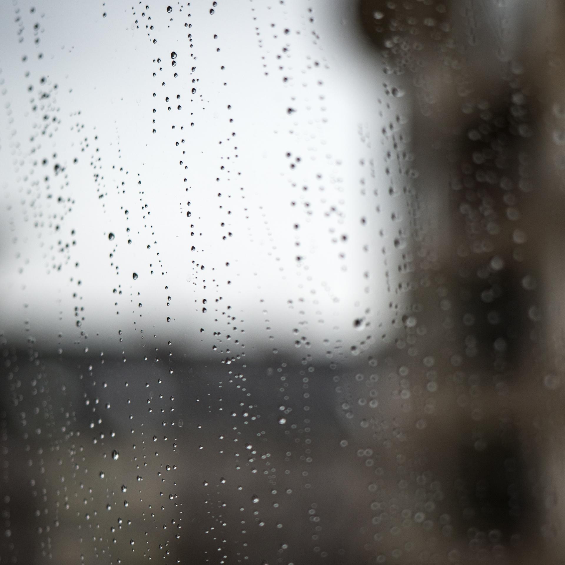 Babblfisch: Montag, Frankfurt, Regen…