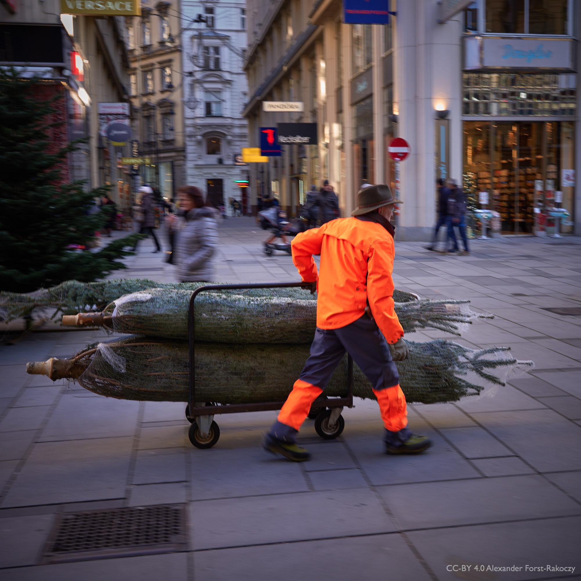 Alfora: Die Weihnachtsbäume rollen am Graben