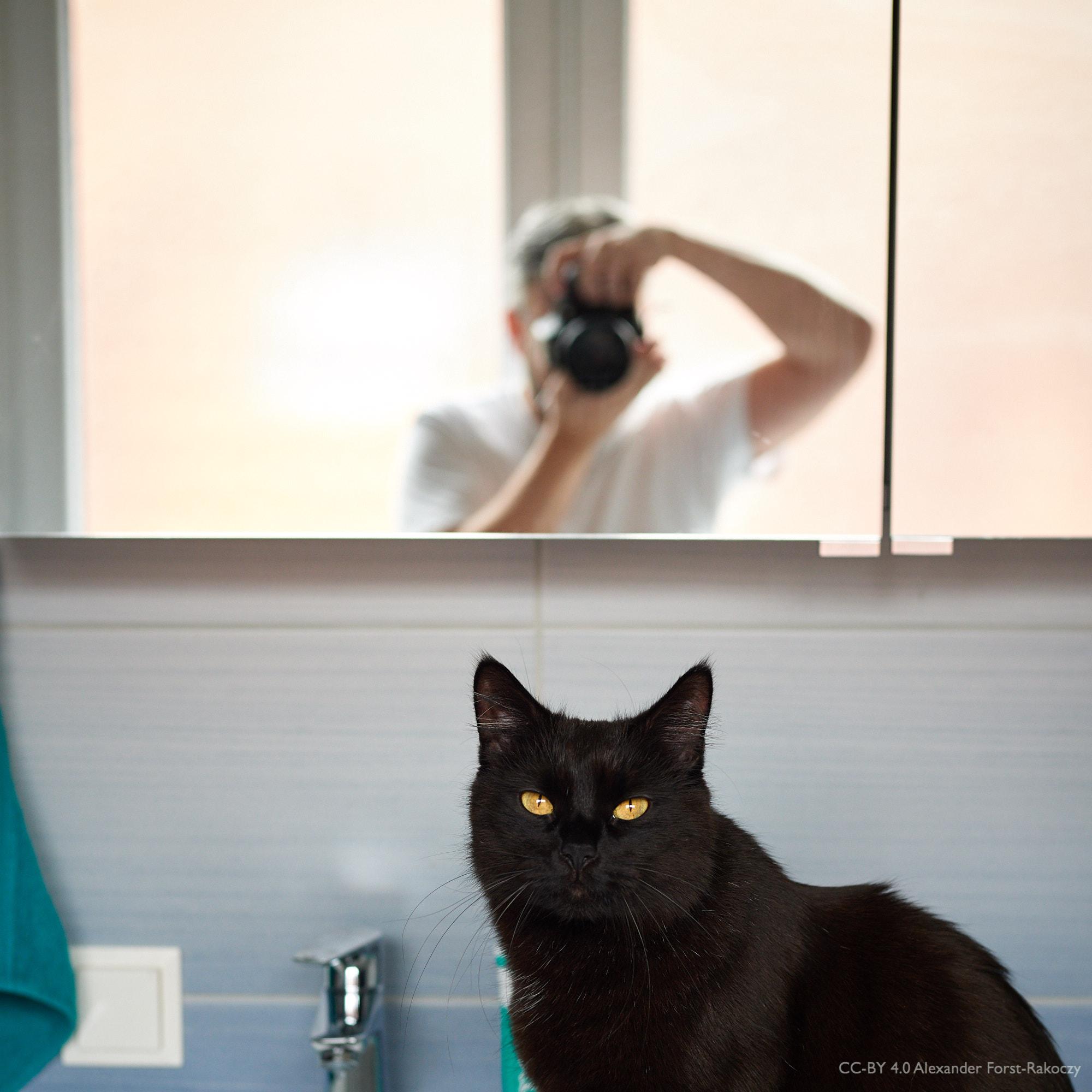 """Alfora: Moriarty """"testet"""" unser neues Waschbecken. Ich mache ein Doppel-Portrait."""