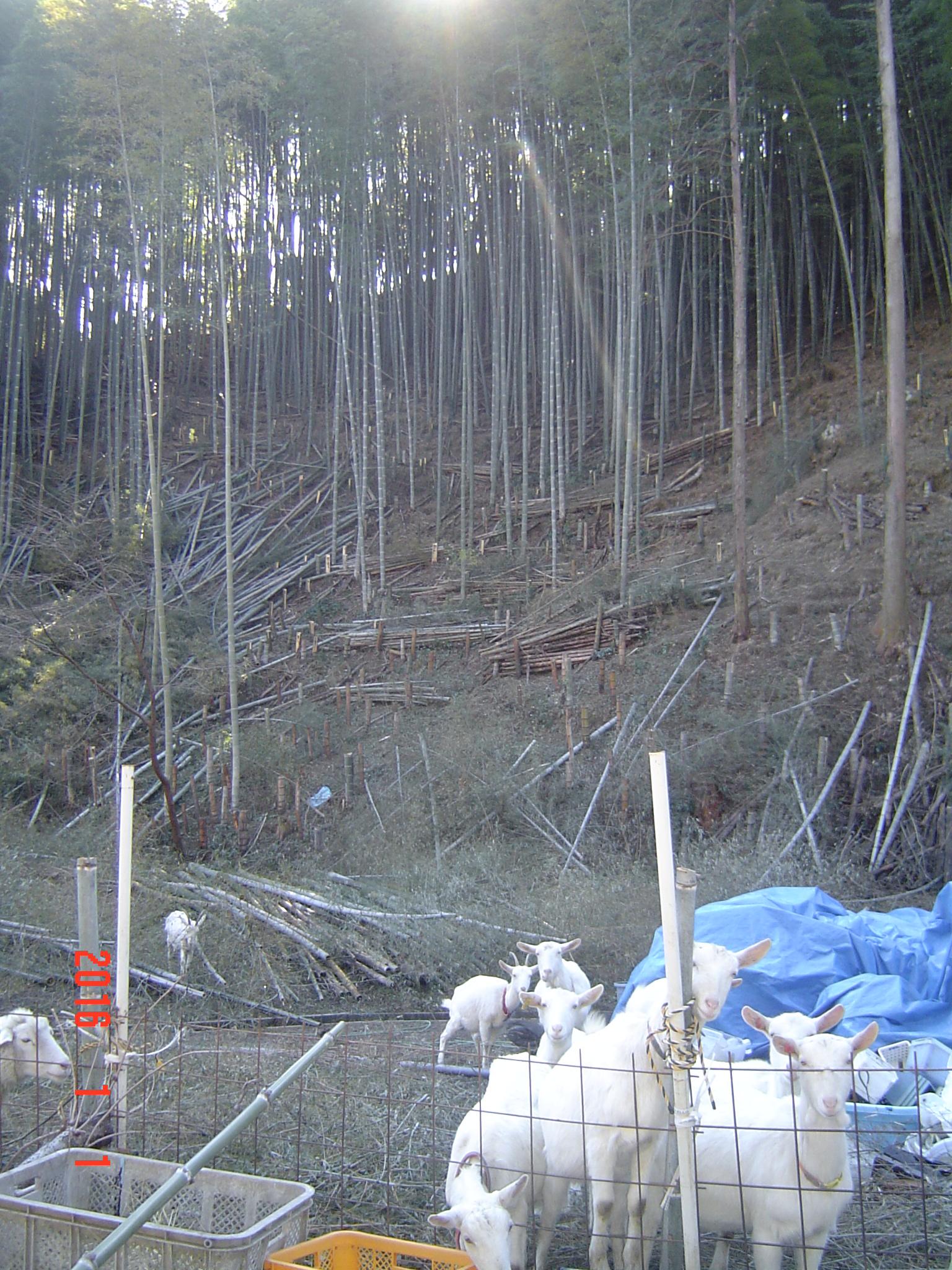 岡部町桂島の放牧地